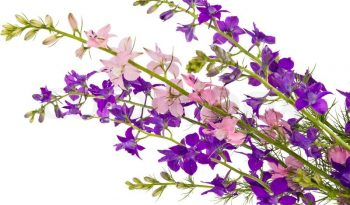 4117597-bouquet-of-wild-flowers-isolated